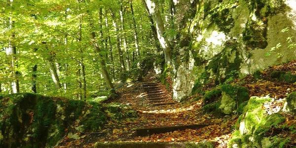 In der wildromantischen Klamm bei Riedenburg im Altmühltal