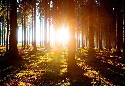Sauerland-Waldroute von Iserlohn nach Marsberg
