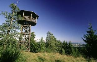 Waldgeschichten mit Adlerblick am Höhenflug