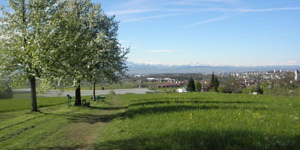 Blick vom Haldenberg