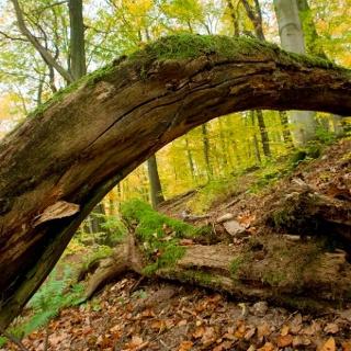 Totholz im Wiegental