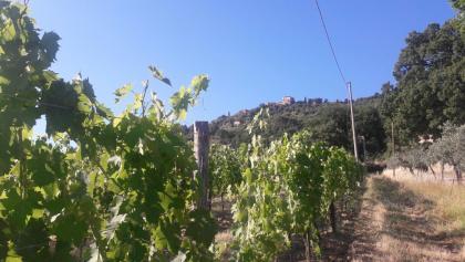 Leaving Montalcino behind