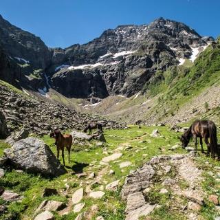 Pferde im Gollingwinkel am Fuße der Nordwand des Hochgolling