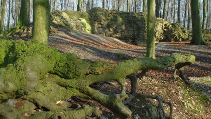 Nur Reste der Holter Burg sowie der Ringmauer sind heute erhalten