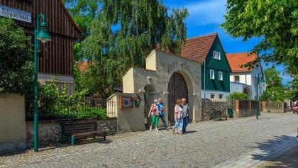 Wanderer in Weinböhla, Historisches Weingut Peterkeller