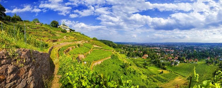 Foto Blick über die Weinberge in Radebeul