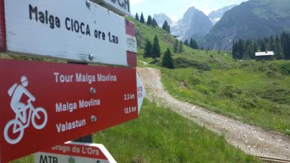 Trail malga Movlina n°974