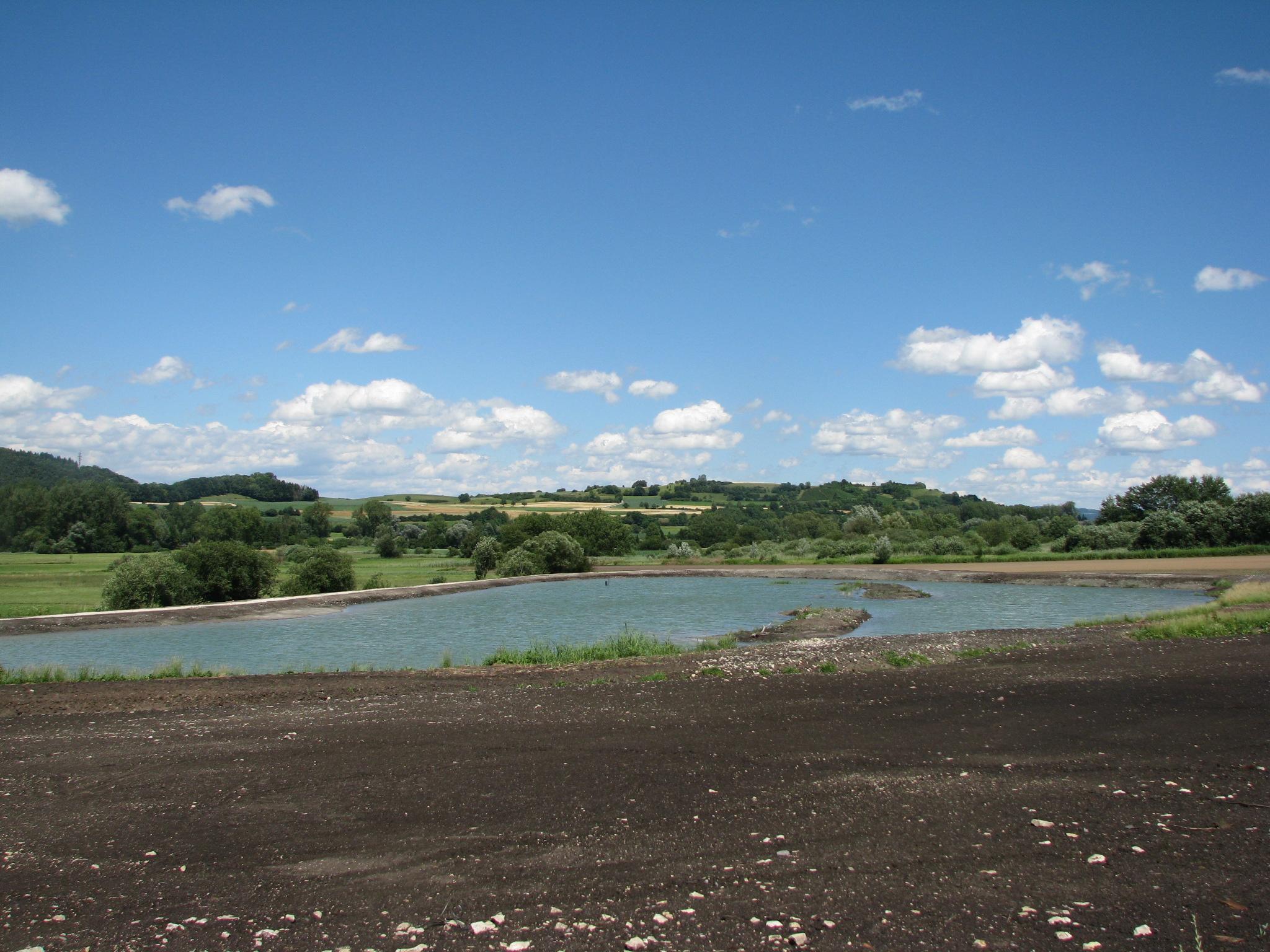 Neu angelegter Biotop in Worblingen