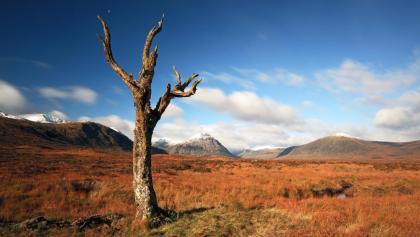 A lone tree on the Rannoch Moor