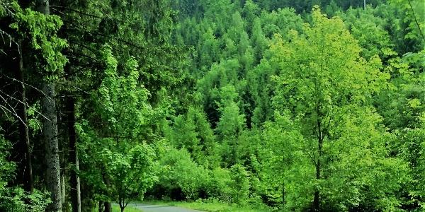 Forstweg durch das Siebertal