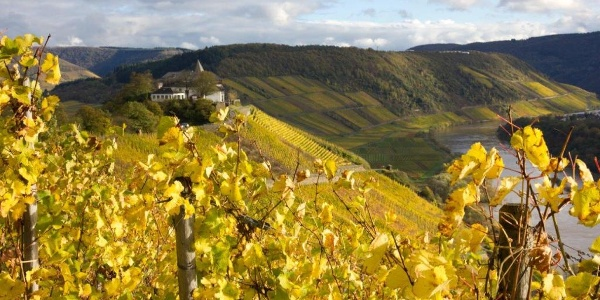 Herbstlaub und Marienburg
