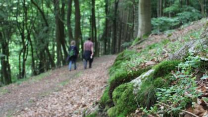Unterwegs auf dem Bergweg zwischen Deifeld und Referinghausen.