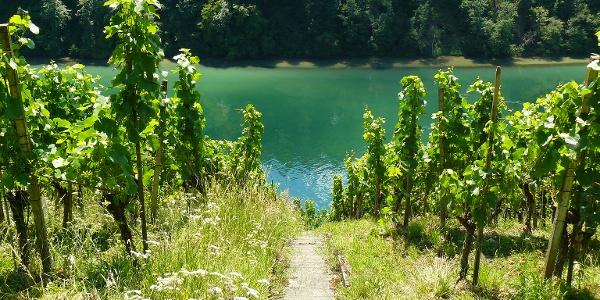 Der Hintere Stadtberg. Eine spektakulär steile Weinlage
