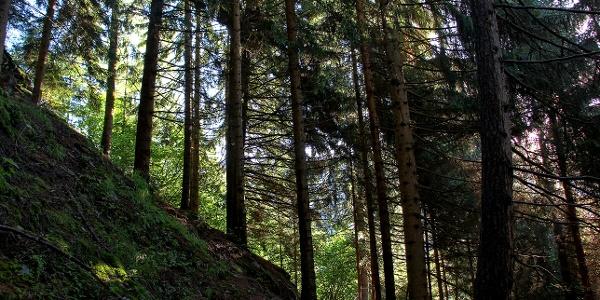 Die Tour beginnt im schattigen Wald