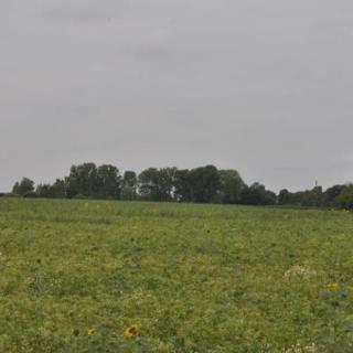 Landschaft am Radweg