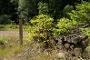 Immer gut markiert: Der Trödelsteinpfad