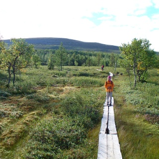 Wooden walkways make it easier for hikers to get through the moor.