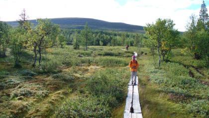 Holzstege erleichtern den Weg durch das Moor.