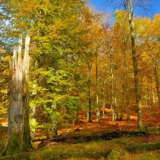 UNESCO-Weltnaturerbe Serrahner Buchenwälder