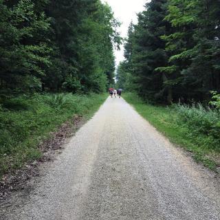 Lange Gerade von Irmannsweiler nach Zang