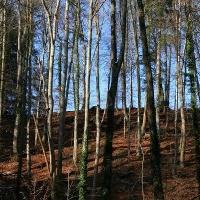 Ausblick in die Waldlandschaft