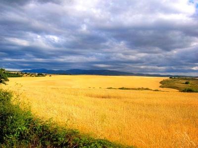 Weizenfelder und Blick auf kantabrische Berge