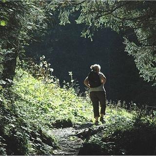 Aus dem Wald in die Lichtung