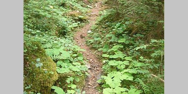 Eingebettetes Waldweglein