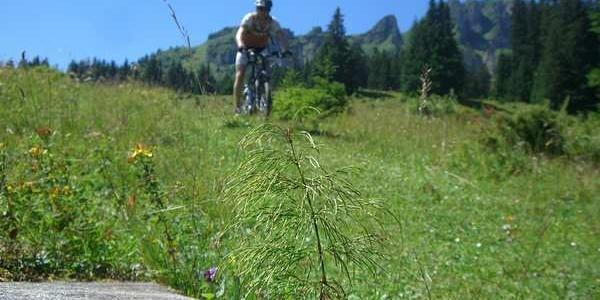 Trail vor Schönhalden