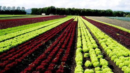 Switzerland's largest vegetable garden