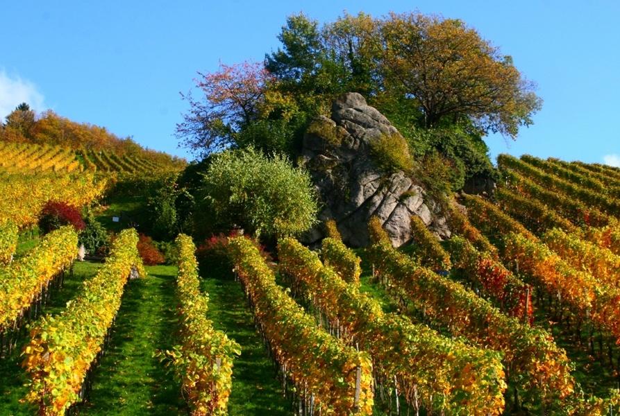 Kappelrodeck - Weinwanderung bei der Hex (Offizielle Tour)