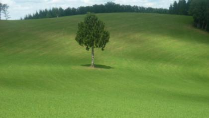 Einsamer Baum oberhalb Landwassereck