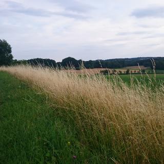 Blick in Richtung Winterstein