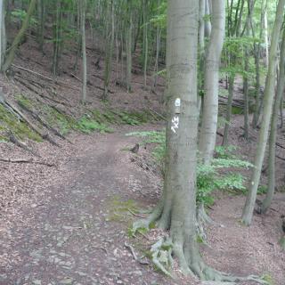 Abzweig Zick-Zack-Weg / Dornröschenweg