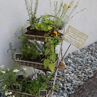 "Kräuterweg ""Probiar Amol"" - Sabine Kössler"