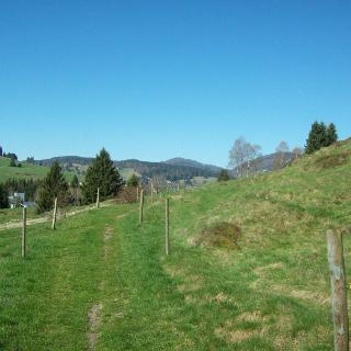 Schwarzwälder Panorama