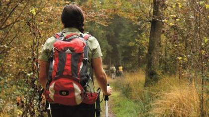 Im lauschigen Wald auf dem Schienenwald-Weg
