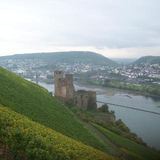 Ruine Ehrenfels und Bingen