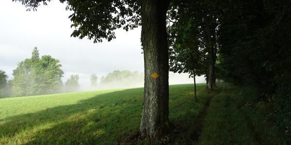 "0500 Hier zu Beginn entlang der Chestenbergkrete noch technisch gemächlich | 47°25'22.4""N 8°12'34.8""E"