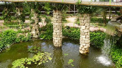 האגם שביער הגשם הטרופי