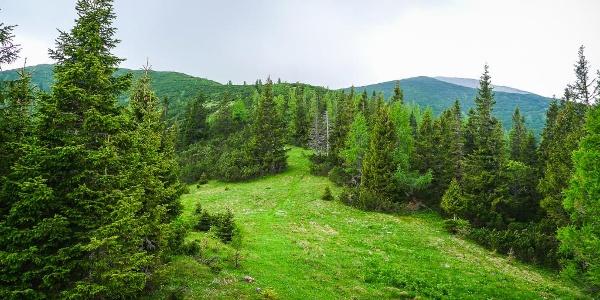 Am Ochsenboden lichtet sich der Wald