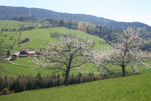 Nordrach - Blumen-Wiesen-Wanderung