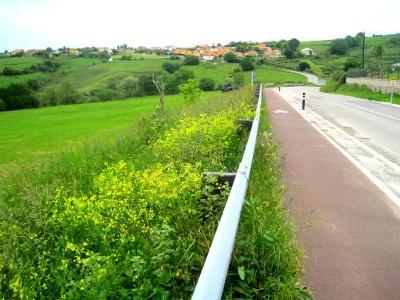 abgegrenzter Pilgerweg vor Santillana