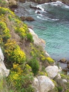 entlang dem Küstenpfad