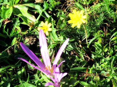 ein Blütenwunder