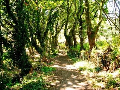 Sentier ombragé entre Sarela et As Moas
