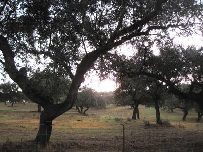 Olivenöl - flüssiges Gold Spaniens