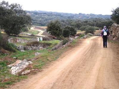 zwischen Olivenhainen bergauf bergab