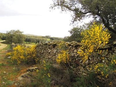 alte Steinmauern begrenzen die Weiden
