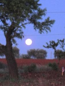 Mond als morgentlicher Wegbegleiter